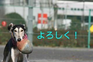 IMG_6049_2-2.jpg